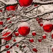 Adventsfeier 2018 im Sanddorn-Garten Petzow bei Potsdam